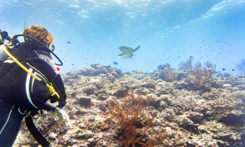 Tourist diving at coral reef in tropical ocean and watching Green sea turtle